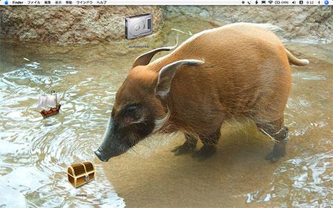アカカワイノシシを背景にしたデスクトップの画像