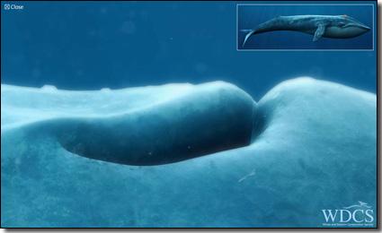 whalebanner.jpg